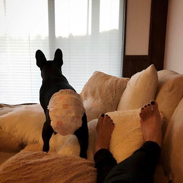 𓇼 この後ろ姿 たまらない😚💓 ➵ ➵ #最近のあだ名 #むつこ  #Frenchbulldog#dog#instadog  #フレンチブルドッグ#フレブル  #ふれぶる#愛犬#犬バカ部#わんこ  #ブリンドル#パピー#puppy#甘えん坊 #メイ#may#めいしゃん#おむつ #ヒートちゃん#8日目くらい