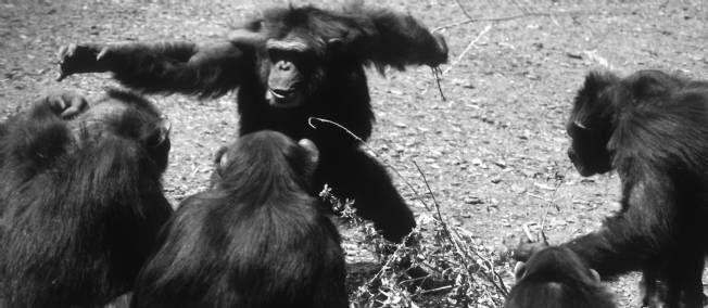 Hubert Reeves : aux sources de la morale