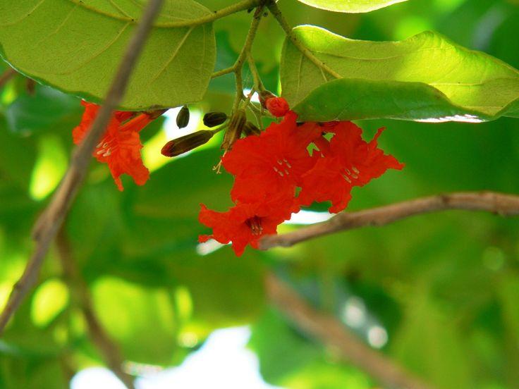 skrivebords bakgrunn images - Tropiske blomster: http://wallpapic-no.com/natur/tropiske-blomster/wallpaper-10127