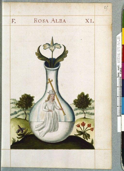 Rosa Alba Capucins de la rue Saint-Honoré Folio 25, Planche 11