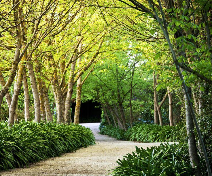 Garden expert Helen Young shares her top tips for creating edging borders in your garden.