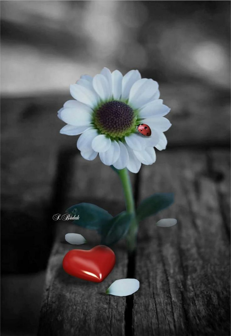 Color Splash Photography Heart