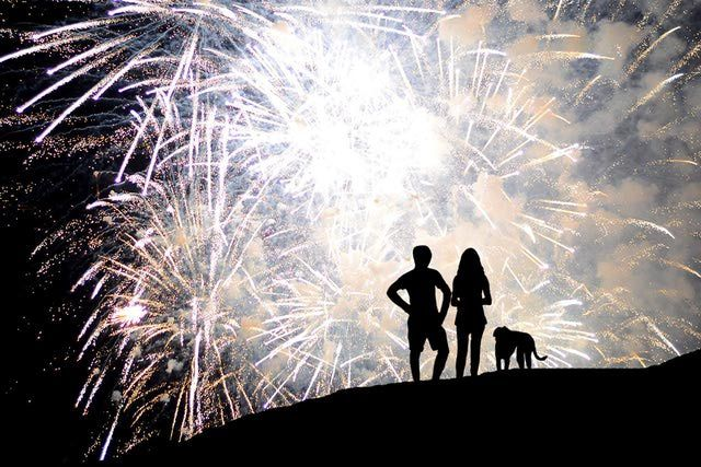 Dogs and Fireworks Phobia