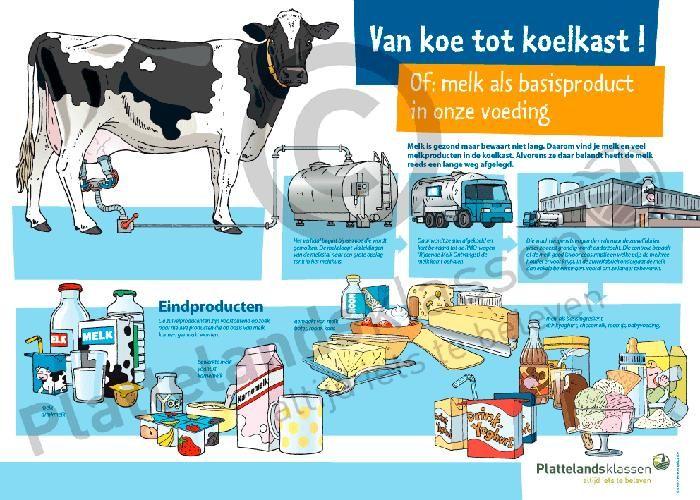 Hoe komt de melk van de koe in de koelkast terecht?