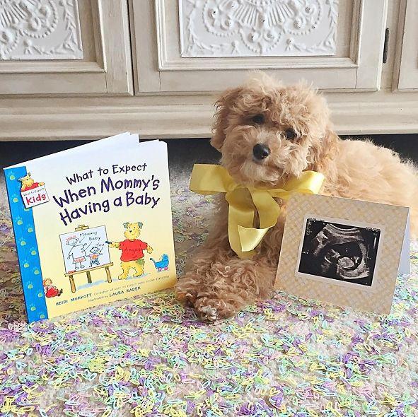 Best 25 Pregnancy announcement dog ideas – Birth Announcement with Dog