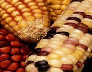 Habari Gani!!! Today is the first day of Kwanzaa. Learn more here -- Habari Gani (What's the News)? #fb