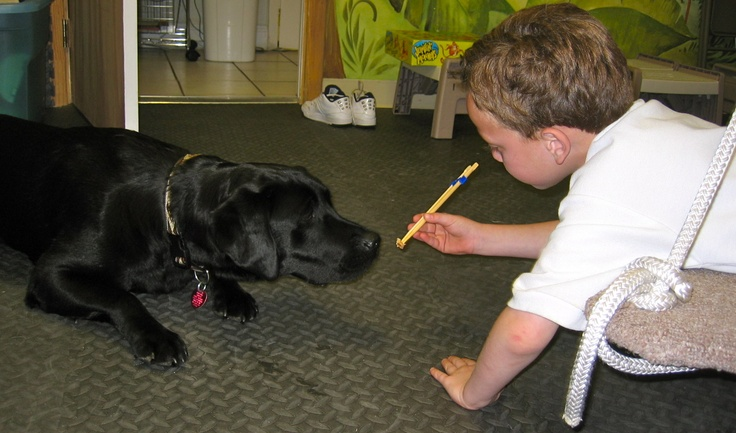 animal-assisted therapy essay Are you a therapist, social worker, educator or health care worker looking for new ways to expand your practice and your professional toolbox are you looking to start you own animal assisted therapy business.