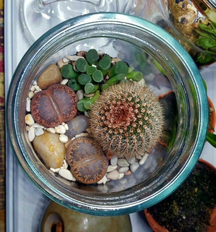 Living Stone Mason Jar Terrarium