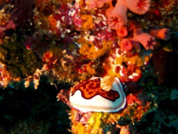 #nudibranch #scuba #diving #maldives