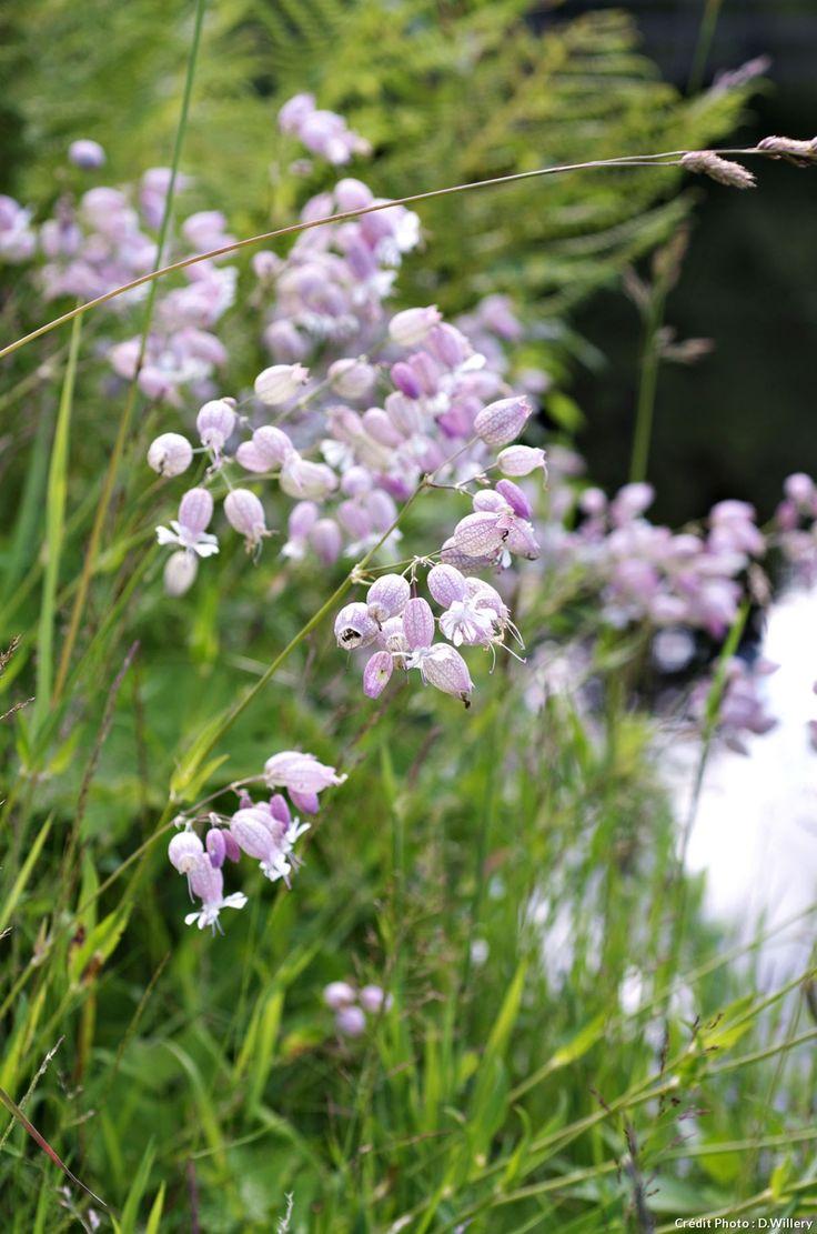 nine plantes sauvages à cultiver au jardin