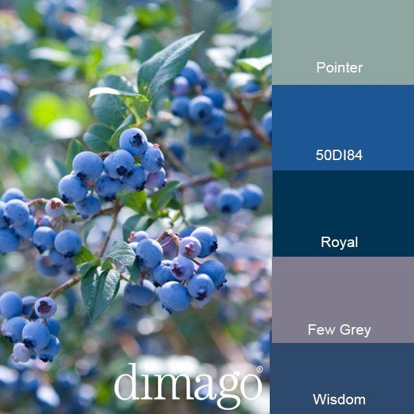 Blauwe bessen als inspiratie. Hier gecombineerd met dimago New Traditionals matte verfkleuren: Pointer, Royal, Few Grey en Wisdom en 50DI84.