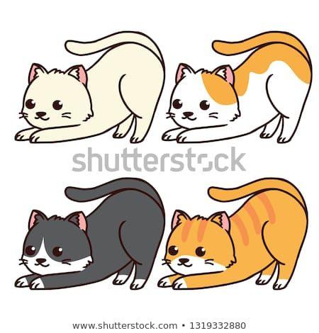upside down cute cat pose in blackginger cream and white