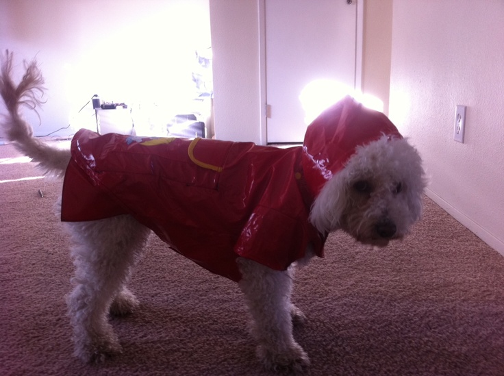 How do you like my homemade dog raincoat? She seems to enjoy it!Homemade Dog