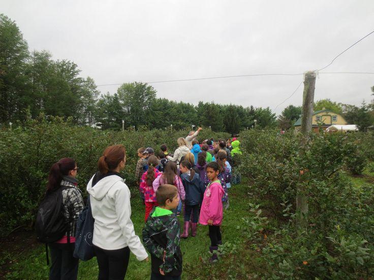 Visite guidée et activité d'interprétation de la nature avec des groupes scolaires