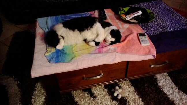 Whiskey asleep on my coffee table, hence the ugly covers!!