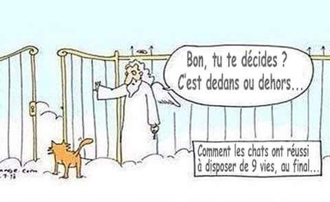 """proverbe chat : """"quelquesoit la porte, un chat est toujours du mauvais côté"""""""