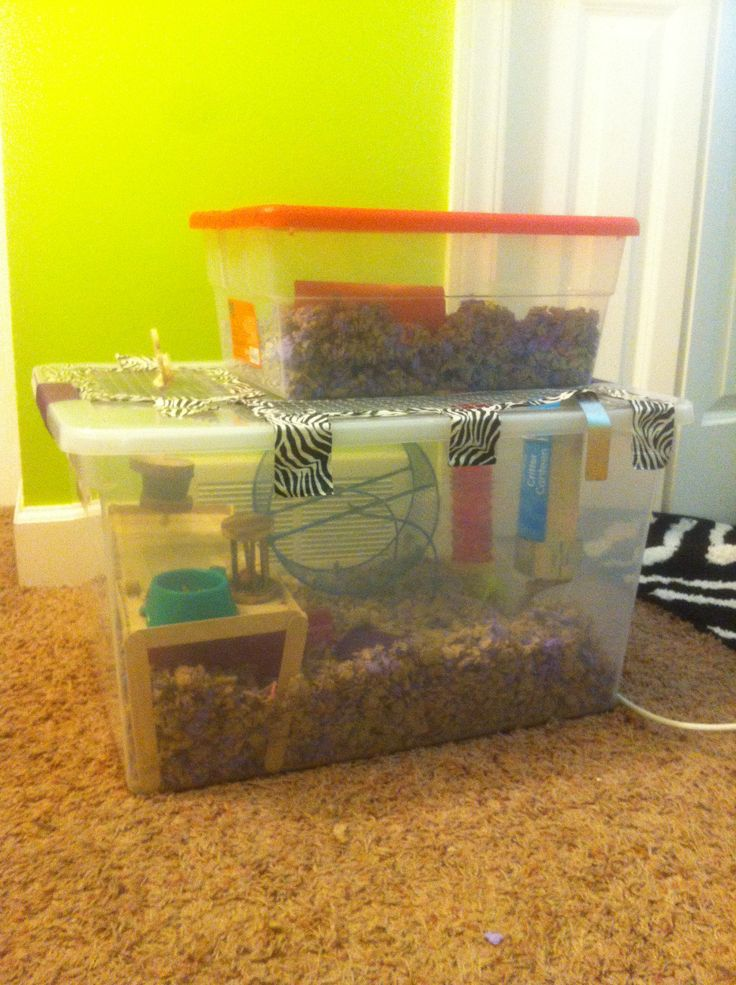 Hedgehog cage tour cage building the minigrid ramp how for Hamster bin cage tutorial