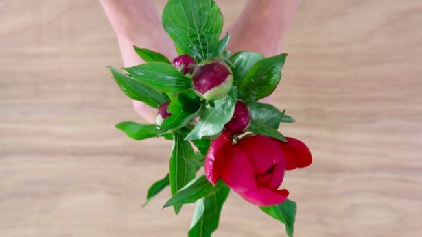 A super simpel trick to make flowers open faster. Check out our video!