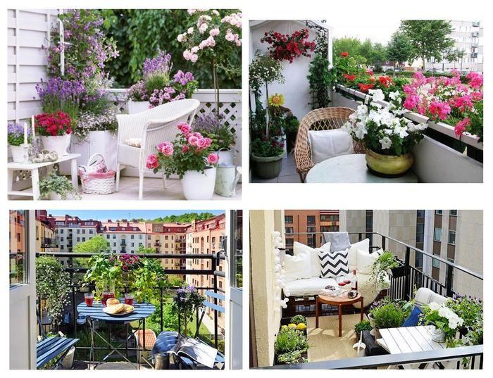 5 роскошных видов цветов для украшения балкона