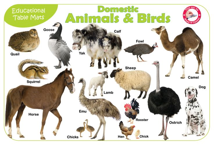 This is a list of animals that have been domesticated by humans. Description from imgarcade.com. I searched for this on bing.com/images