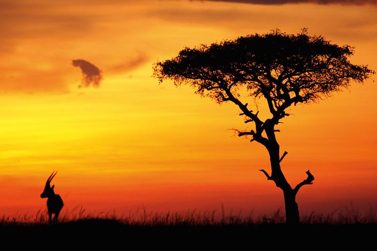 afrika landschaftsbilder | Tansania Reiseführer, Reisebericht, Reisetipps, Bilder 2016 | www ...