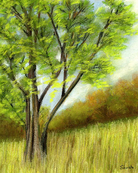 """Solitary Tree in a field of long grass. Pastel painting by Sarah Dowson.  Soft Pastel on Pastel Paper 10""""x8"""" Fine Art Prints and Greeting Cards available here."""