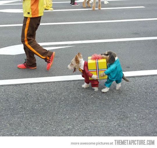 Best dog costume ever…