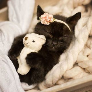 Ssshhhh! Don't wake kitty... via: KITTY LEE PHOTOGRAPHY sweet Kitten with her dolly kitty.