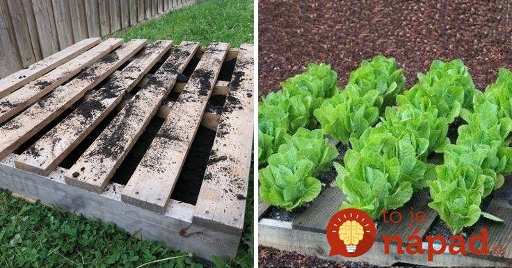 Geniálne tipy, ako využiť staré drevené palety pri pestovaní. Oplatí sa vyskúšať! :-)