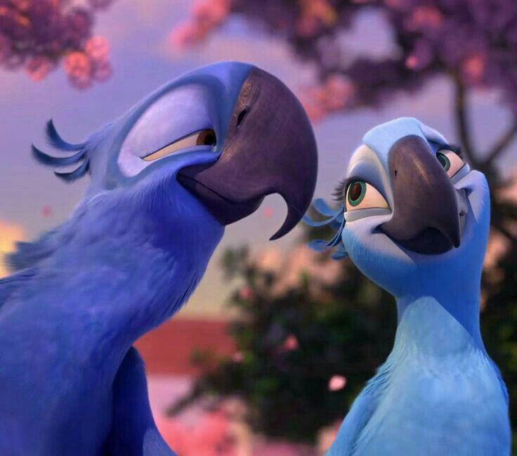 картинки жемчужинки и голубчика из рио поэтому такие обряды