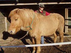 Dr. Patricia Wanas hat sich in ihrer tierärztlichen Praxis intensiv mit dem Equinen Cushing Syndrom auseinandergesetzt.