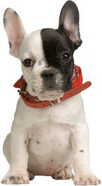 Confused about what the best dog food brands are? Kim's Pets can help! Check out our dog food reviews page!