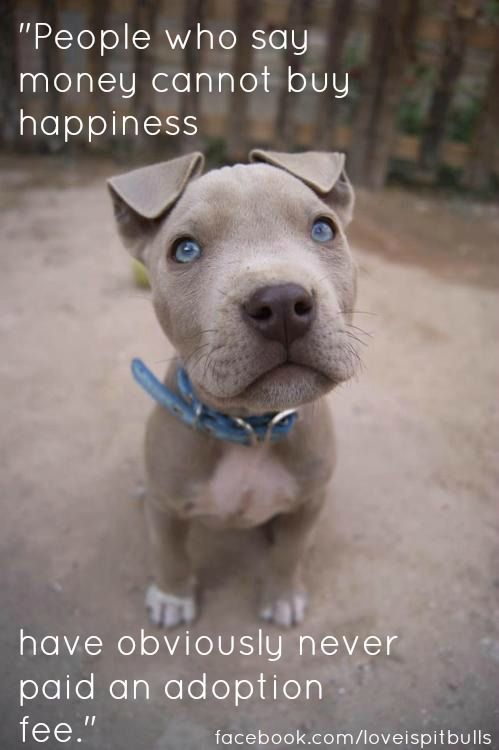 People who say money can't buy happiness have obviously never paid an adoption fee.