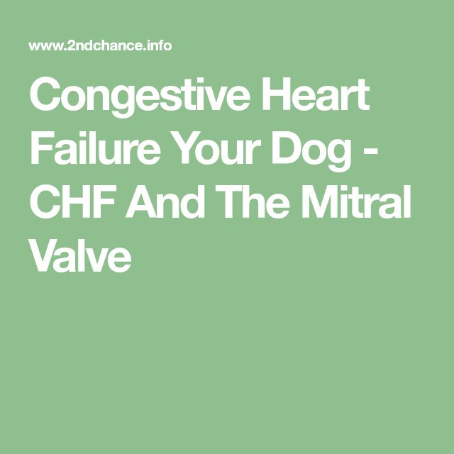 Natural To Use For Dog Heart Congestive