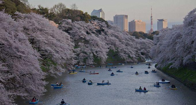 Les 7 meilleurs spots à #Sakura de #Tokyo, un événement au #Japon à découvrir sur le #blog grâce à @tunimaal