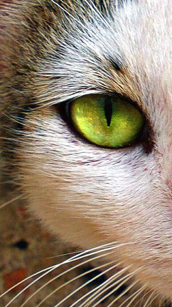 Kedi #Cat #Eye