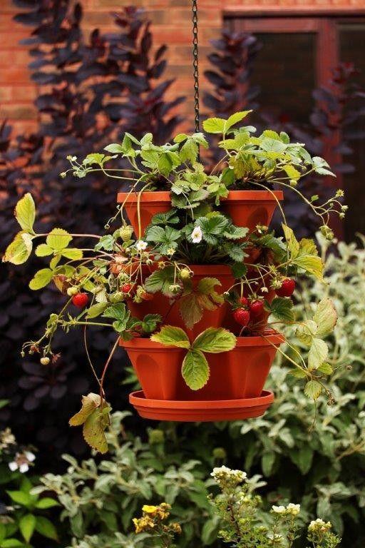 Jordgubbs- & kryddkruka med jordgubbar som ampel