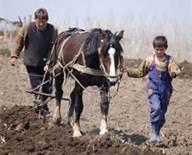 Farming in Moldova