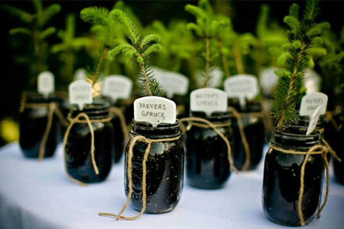 wedding favors: I like the idea of little flowers, perhaps have seed packets for people to take home.