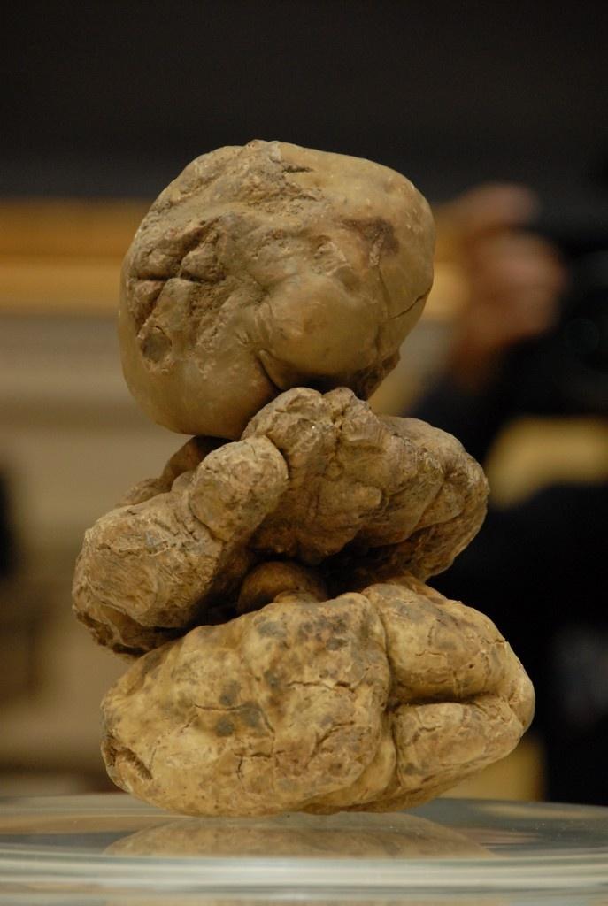 """Devil's Diamonds"". 1,5 kilo Tartufo Bianco - White Truffles from Alba, Piemonte."