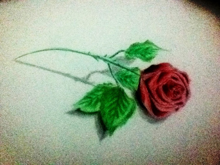 red rose - color pencil :) | natural objects drawings ...