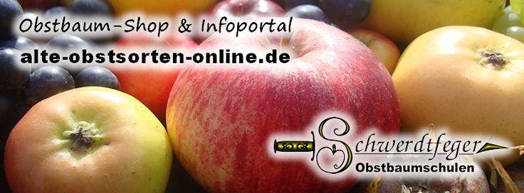 Ihr Obstbaum-Shop! Alte Obstsorten - Alte Apfelsorten - www.alte-obstsorten-online.de - Obstbaum-Shop der alten Obstsorten - Obstbäume aus Holstein!