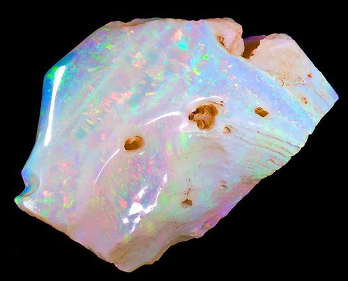 opalized petrified wood