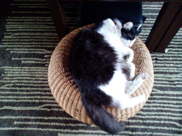 Cat:-) =-O