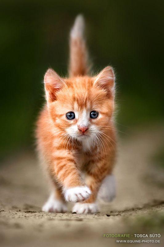 Wo kommst du her, kleines Kätzchen? Du siehst ja herzallerliebst knuffig tapsig süß aus!