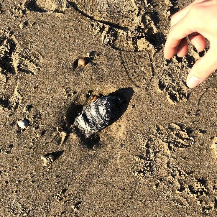 En dan vind je gewoon een wilde oester op het strand #typischzeeuws #gevondenschatten #oesters #strandwandeling #zeeuwsekust #lovezeeland #zeeuwsenzo