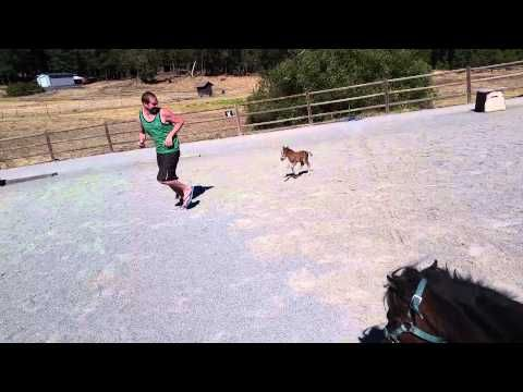 This Is The Tiniest Horse Ever. And He Will Chase You DOWN.