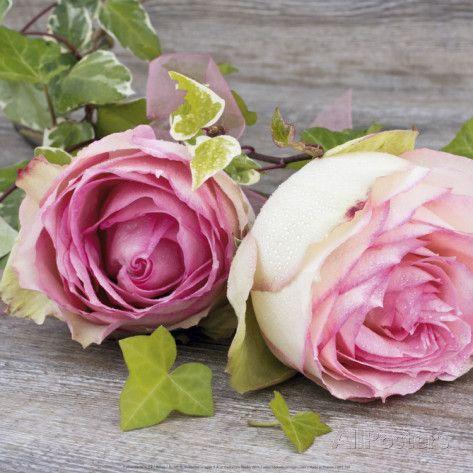 Roses Affiches par Catherine Beyler sur AllPosters.fr