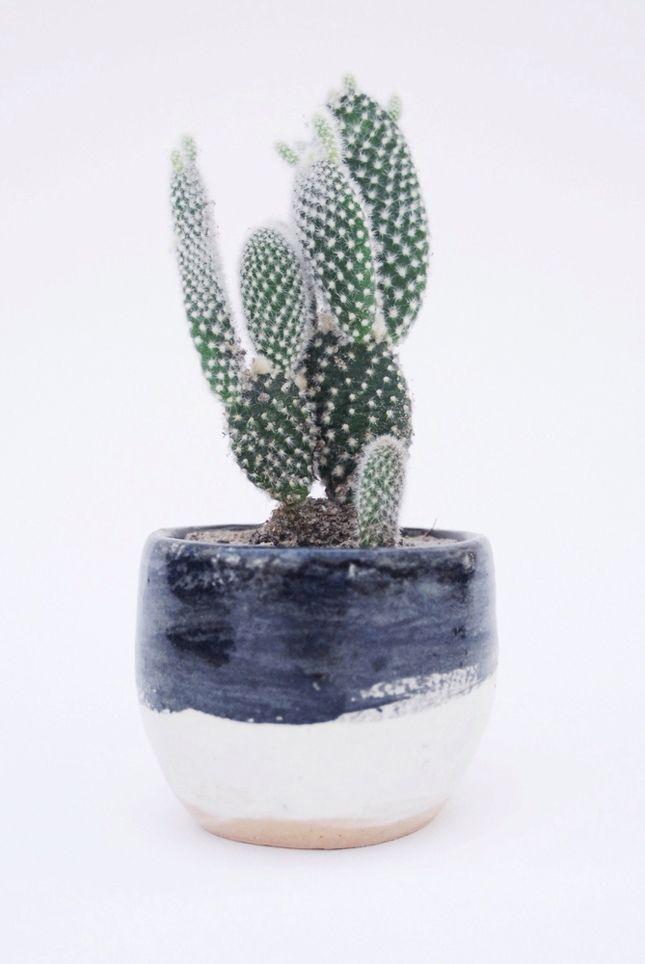 127 Best Opuntia Cactus Images On Pinterest Opuntia 400 x 300