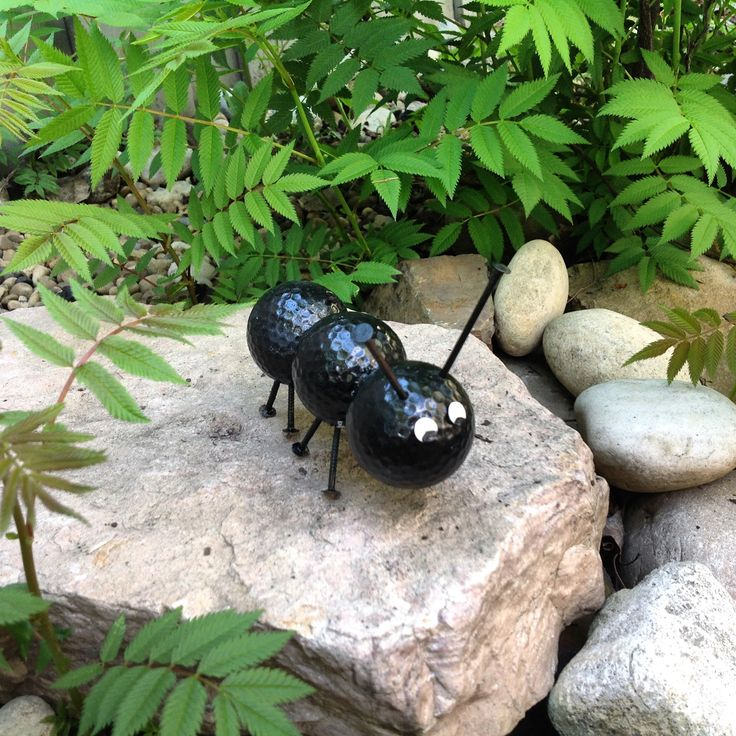 Best 25 Golf Ball Ants Ideas On Pinterest Cutter Bug